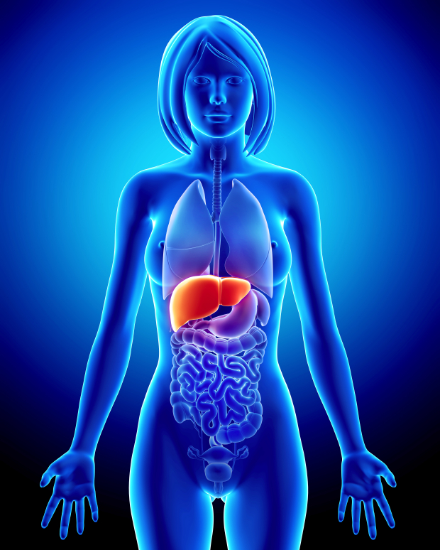 Your liver works hard. But it doesn't get the support it needs. Here are 5 natural ingredients for keeping your liver healthy.