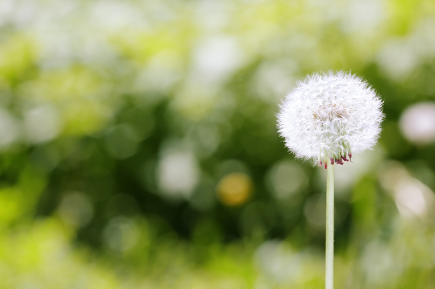Don't live at the mercy of your allergies. And don't depend on OTC medicines to fix what's actually wrong. Here are five natural ways to ease your allergies.