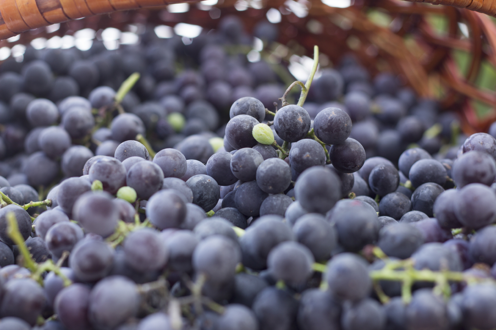 Don't let the mainstream fool you: resveratrol fights inflammation.