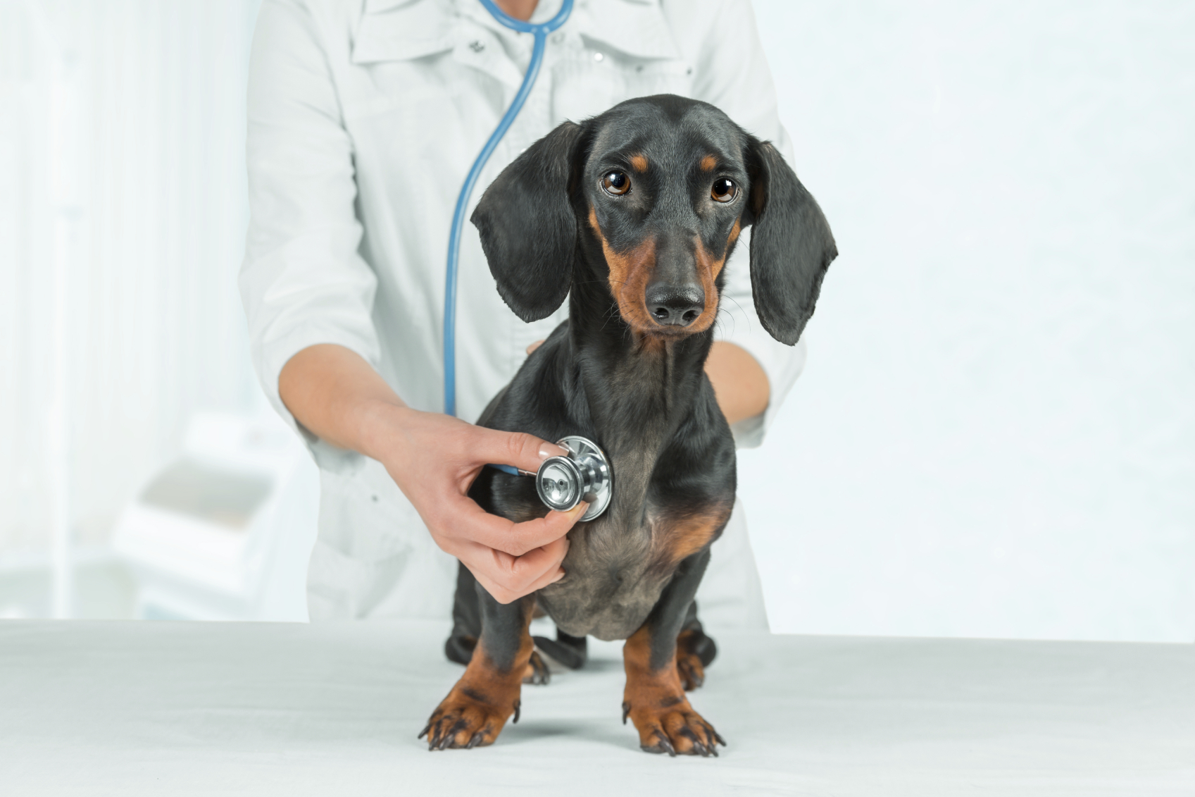 The new flu shot for dogs is ineffective and full of side effects.