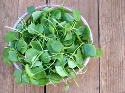 A new study shows that watercress extract lowers carcinogen levels in smokers, lessening lung cancer risk.