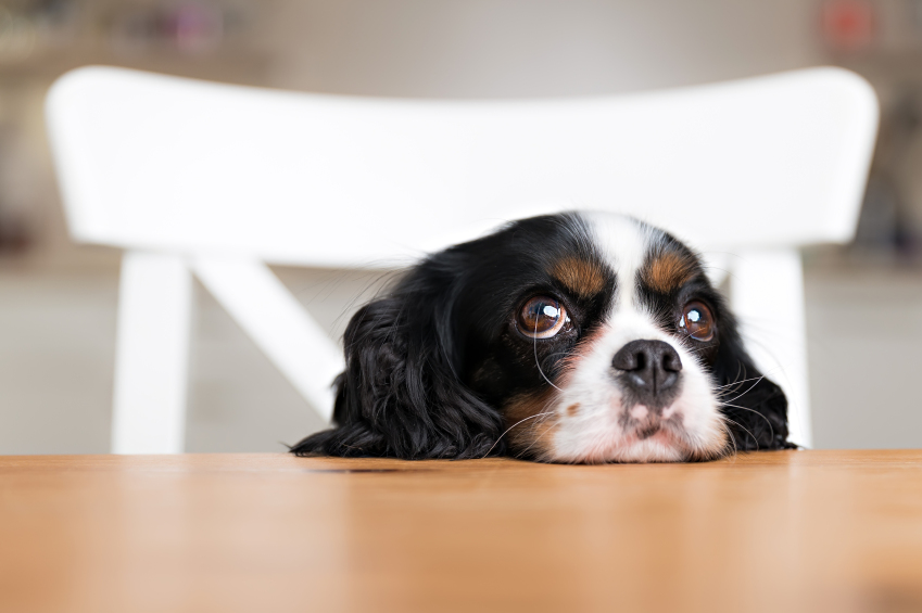 Grapes, macadamia nuts, milk, and many other human foods are toxic to dogs. Here's what to do if your pet eats a canine poison.
