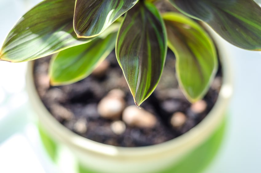 These are the top 10 houseplants to purify indoor air.