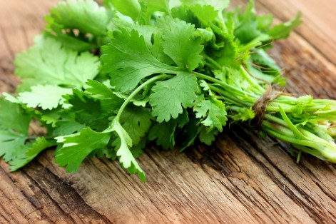 Cilantro can be used to get rid of heavy metal contaminants in water, a new study finds.