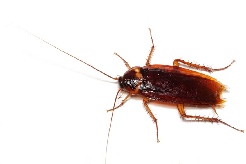 Cockroach milk may be the next superfood. Scientists in India have discovered it is the most nutrient-dense food ever tested.