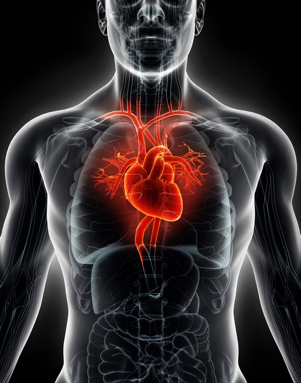 Phpto of heart health.